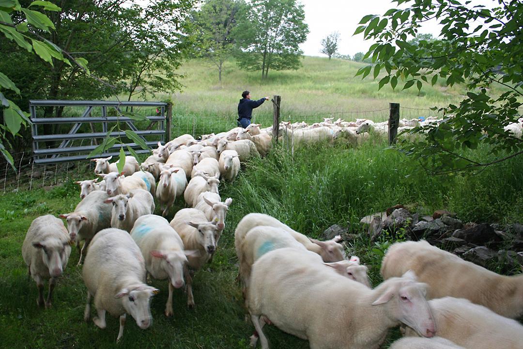 Farm_