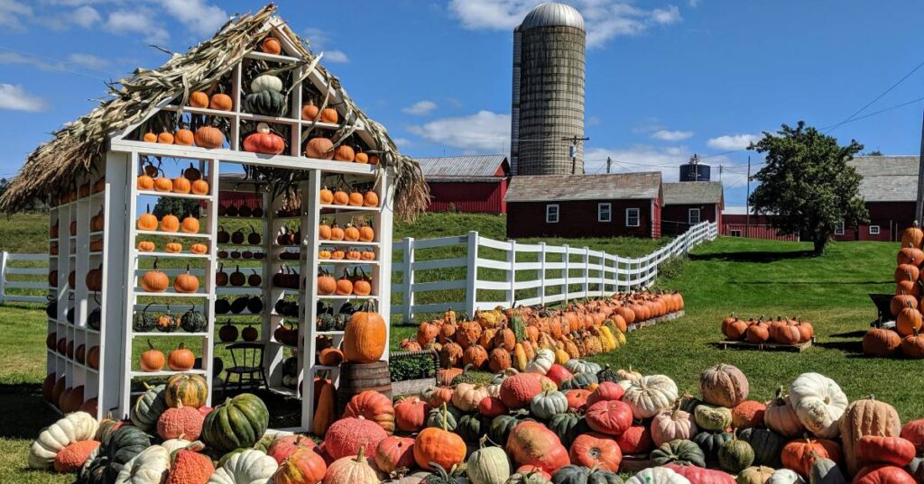 Fall Farm with Pumpkins