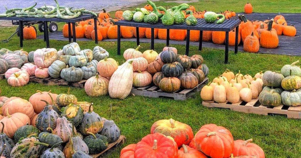 pumpkins and gourds in fall