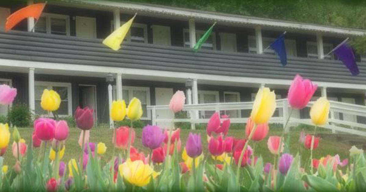 colorful flowers outside a building