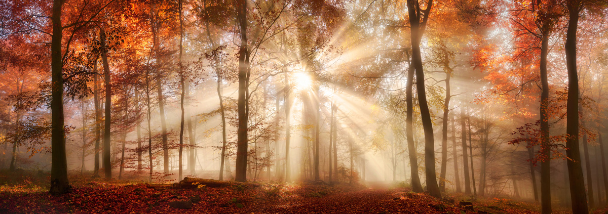 Rays of sunshine in forest