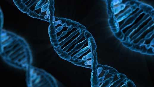 DNA - bp coyle