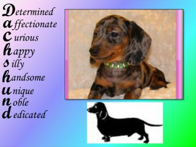 b-dachshund-spelling-view