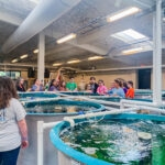 Lowcountry Field Trips enjoyed a trip to Waddell Mariculture Center wet lab.