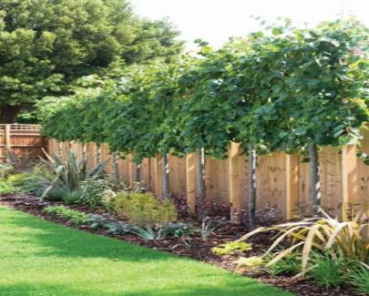 screen-fence-3