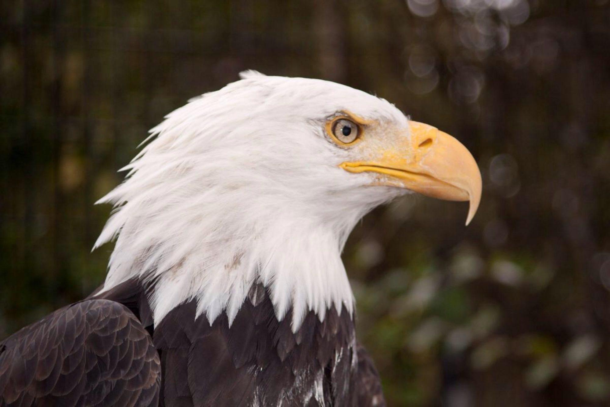 Eagle Crest Ministries & Victory Church NWA