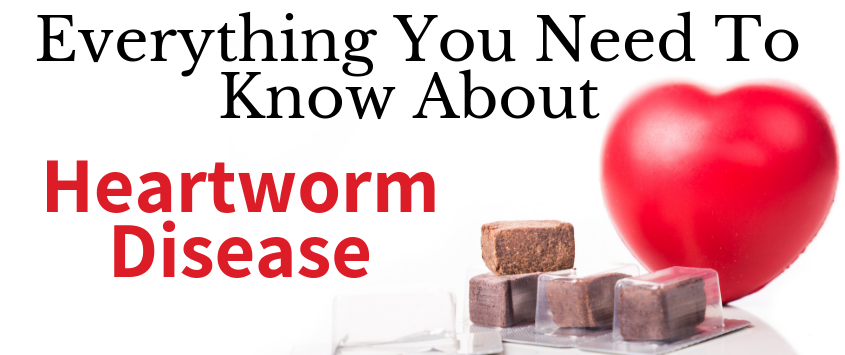 Everything You Need To Know About Heartworm Disease - Veterinarian Florence Ky - PetWow