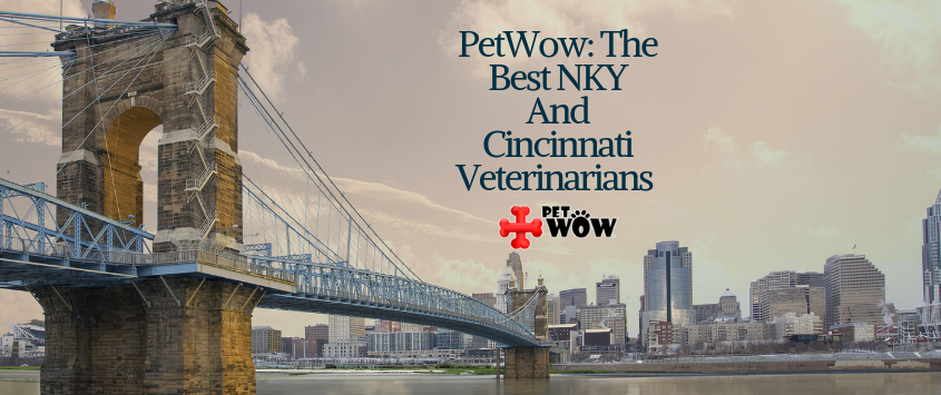 Best Cincinnati & Northern Kentucky Veterinarians - PetWow