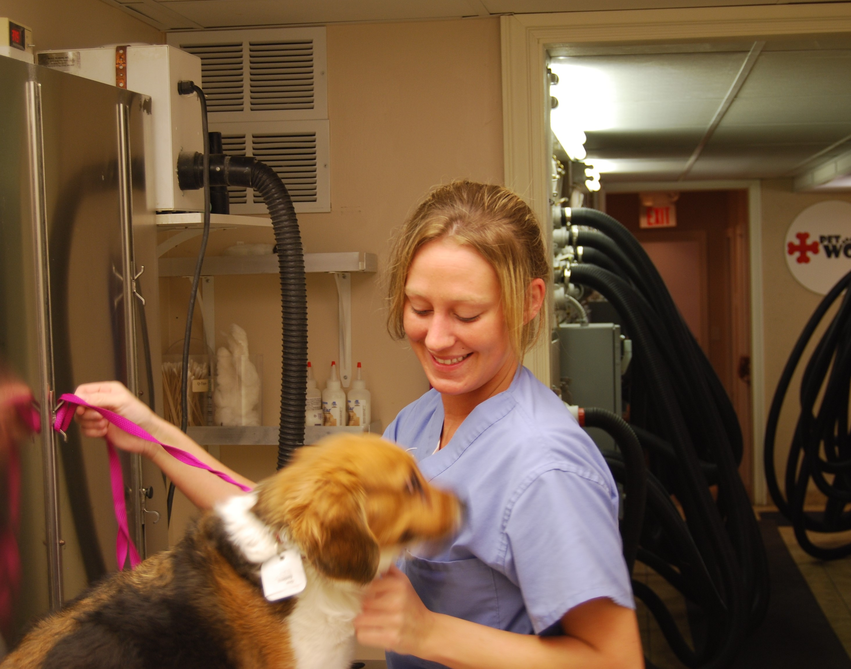 Highland Heights Grooming - Pet Wow Highland Heights Ky - PetWow