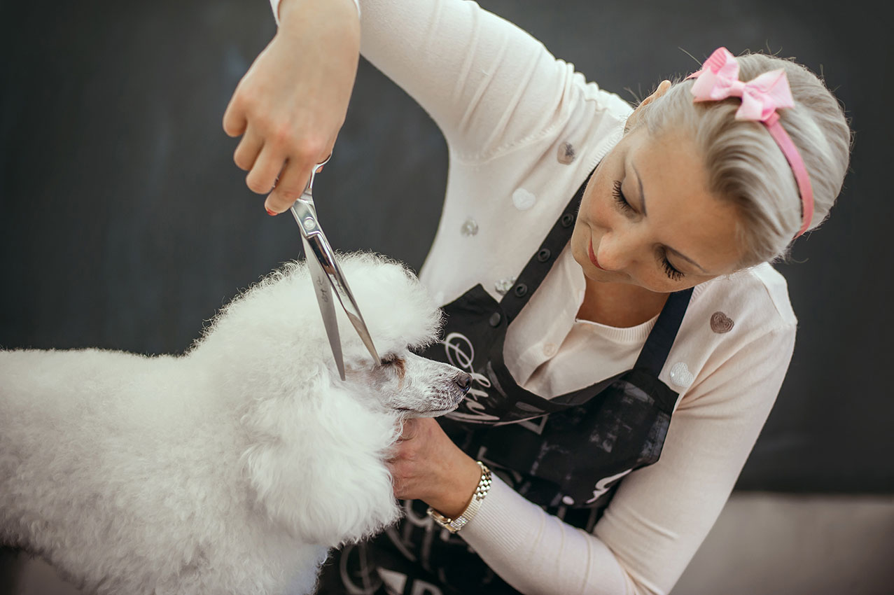 Pet Grooming - Mobile Dog Grooming Near Me - Petwow