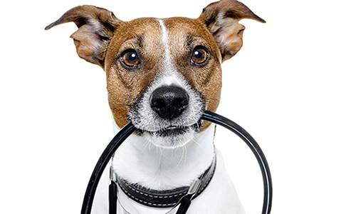 Dog Veterinarian Near Me - PetWow