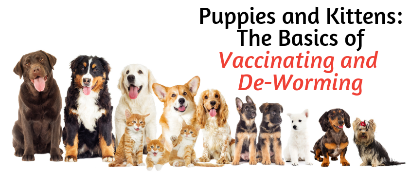 The Basics of Vaccinating and De-Worming - PetWow