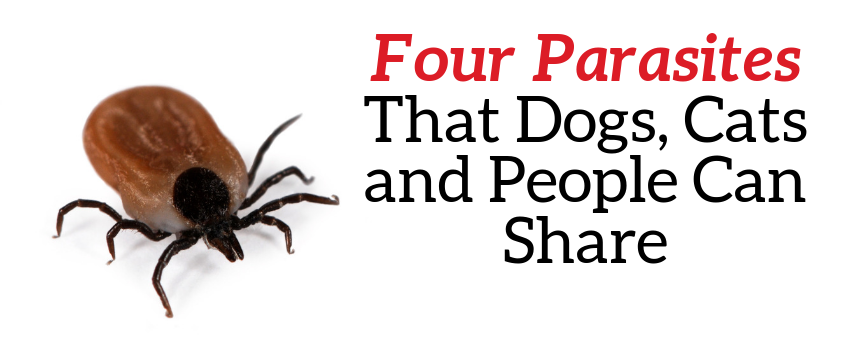 Four Parasites That Dogs, Cats and People Can Share - Veterinary Services Near Me - PetWow