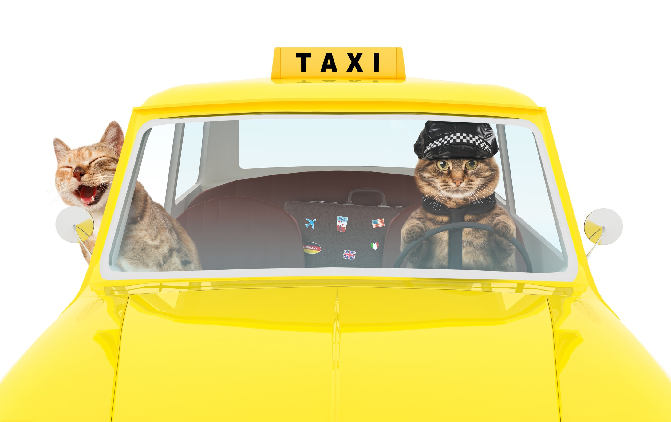 Pet Grooming Taxi