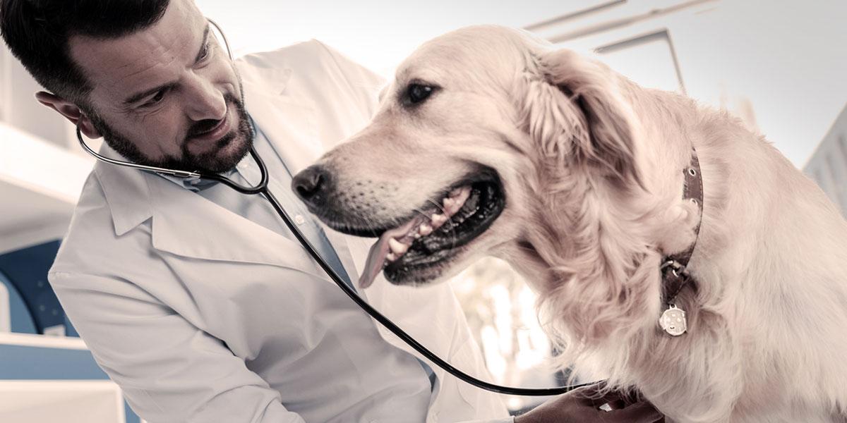 Pet Veterinarian Near Me - PetWow
