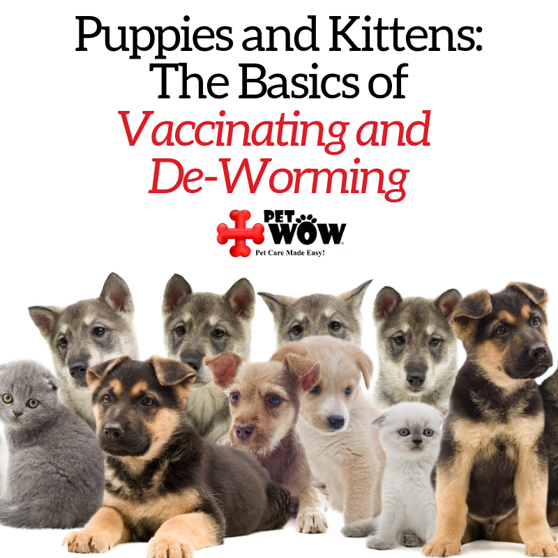Puppies and Kittens: The Basics of Vaccinating and De-Worming