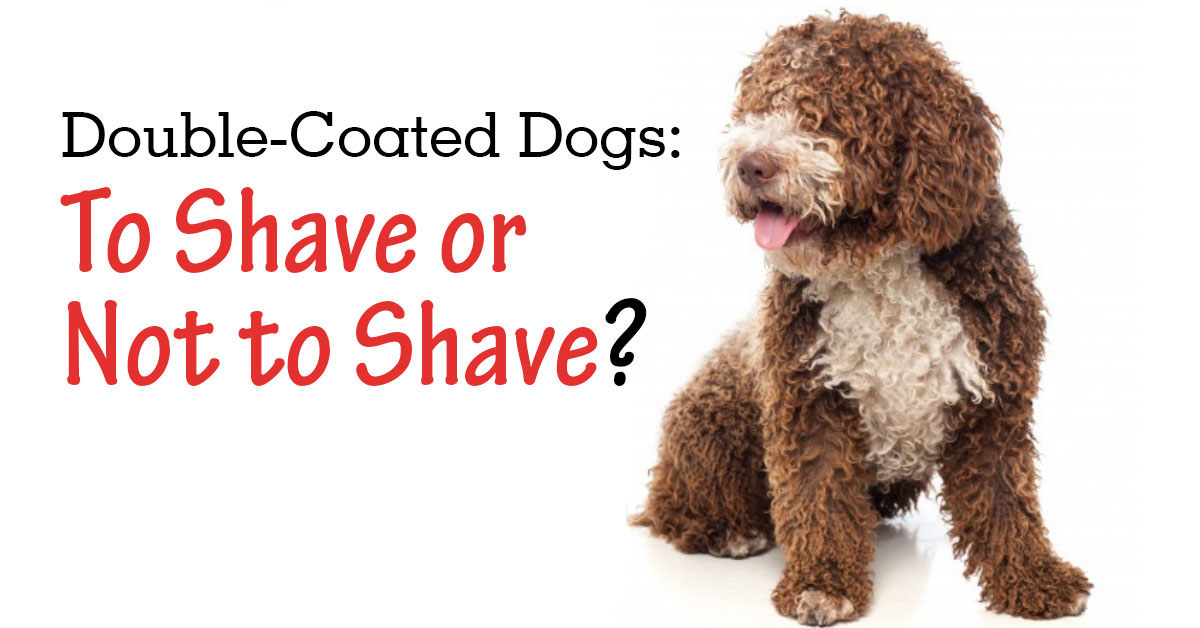 Double Coated Dogs: To Shave or Not To Shave? - PetWow