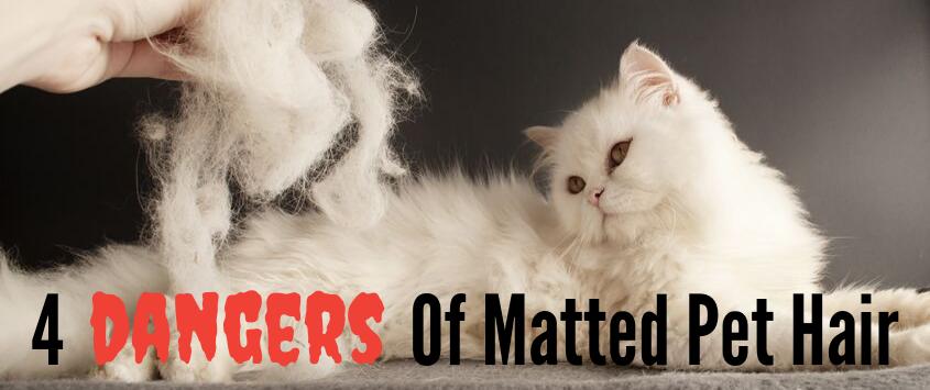 4 Dangers Of Matted Pet Hair