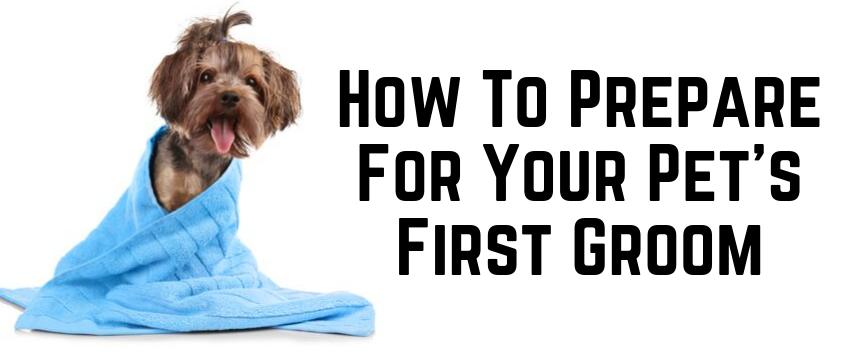 How To Prepare For Your Pet's First Groom