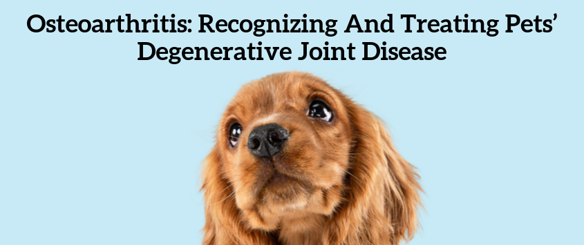 Osteoarthritis: Recognizing and Treating Pets' Degenerative Joint Disease