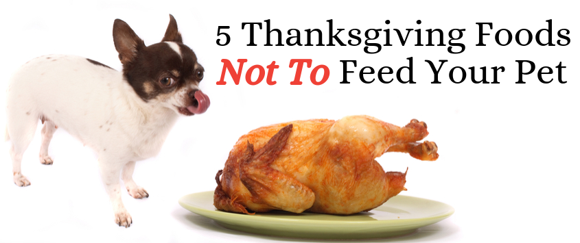 5 Thanksgiving Foods Not to Feed Your Pet