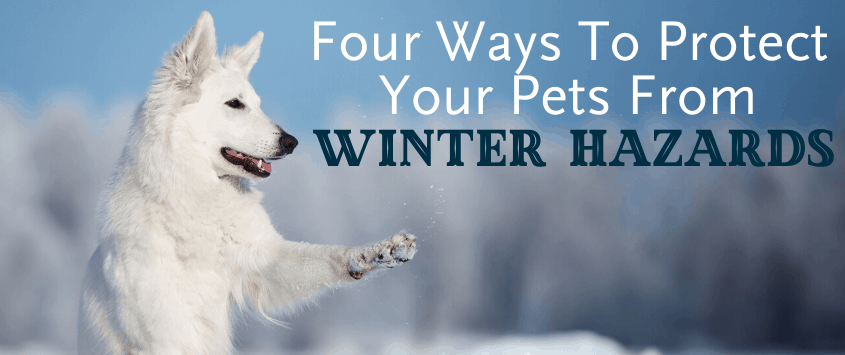 Four Ways to Protect Your Pets from Winter Hazards