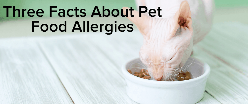 Three Facts About Pet Food Allergies