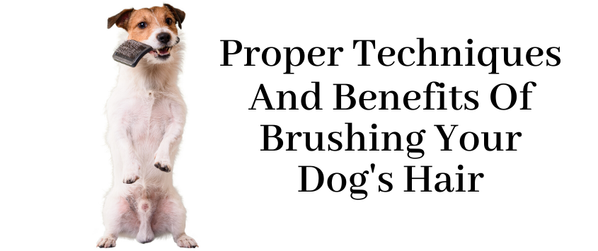 Proper Techniques and Benefits of Brushing Your Dog's Hair