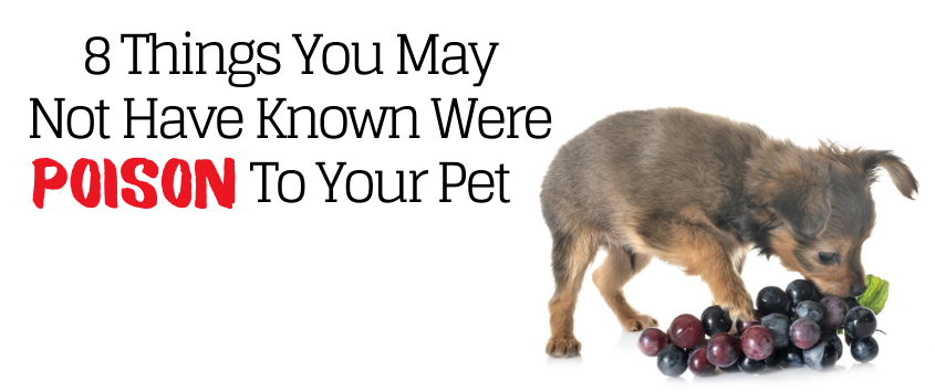 8 Things You May Not Have Known Were Poison to Your Pet