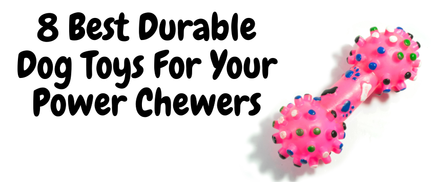 8 Best Durable Dog Toys For Your Power Chewers
