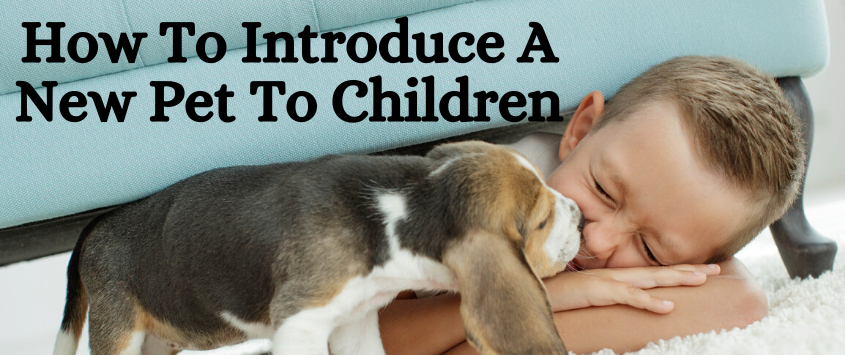 How to Introduce a New Pet to Children