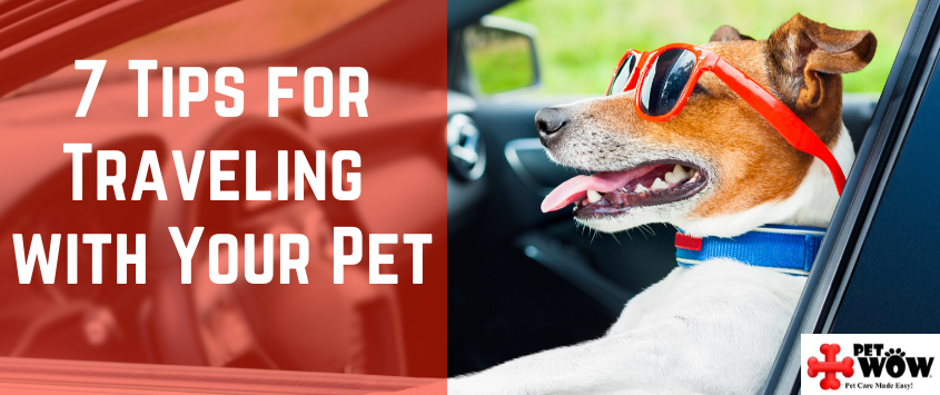 7 Tips for Traveling with Your Pet