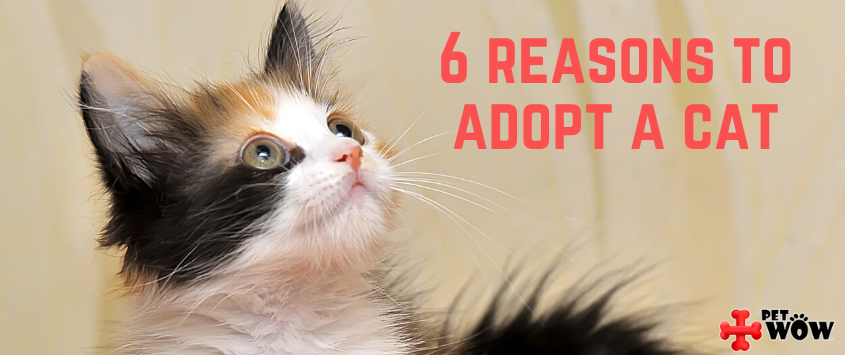 6 Reasons to Adopt a Cat