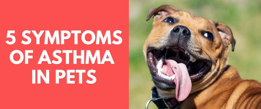 5 Symptoms of Asthma In Pets