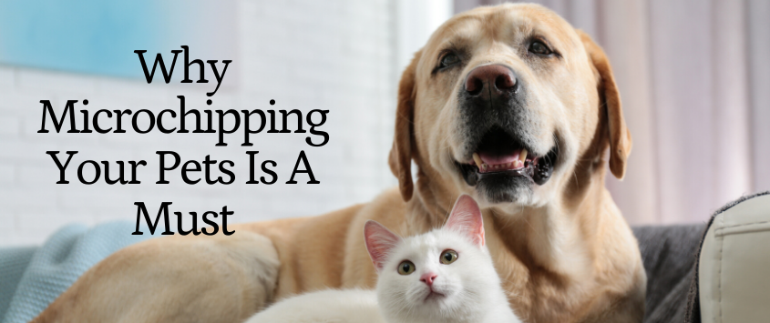 Why Is Microchipping A Must?