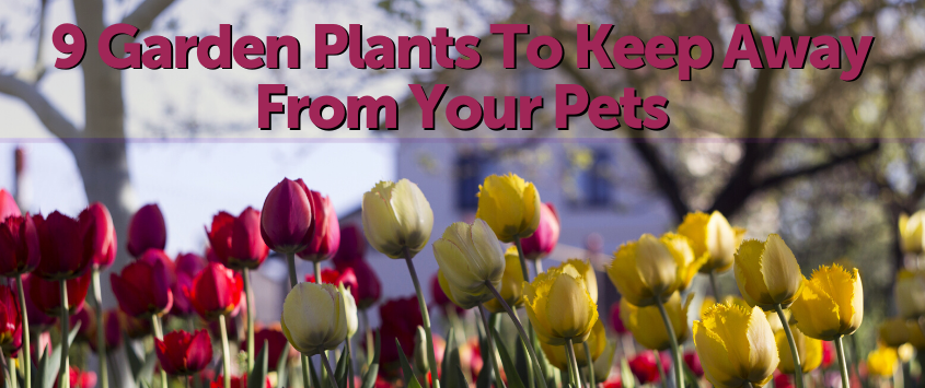 9 Garden Plants to Keep Away from Your Pet