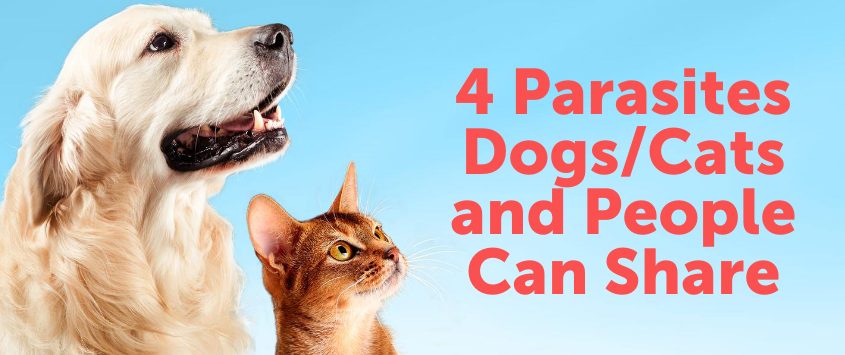 4 Parasites Dogs/Cats and People Can Share