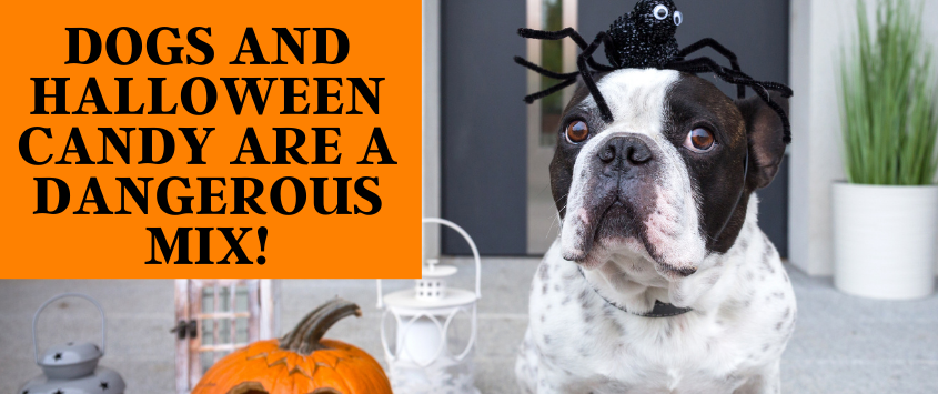 Dogs And Halloween Candy Are A Dangerous Mix