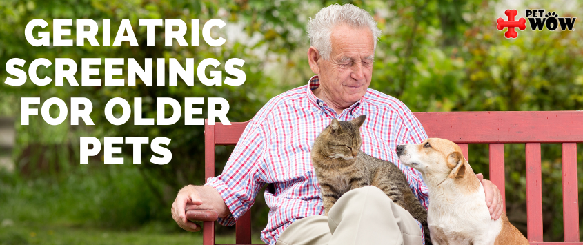 Geriatric Screenings For Older Pets