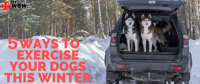 5 Ways to Exercise Your Dog this Winter