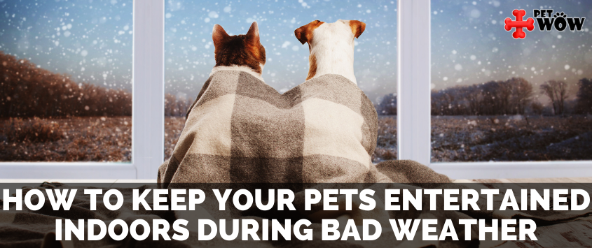 How To Keep Your Pets Entertained Indoors During Bad Weather