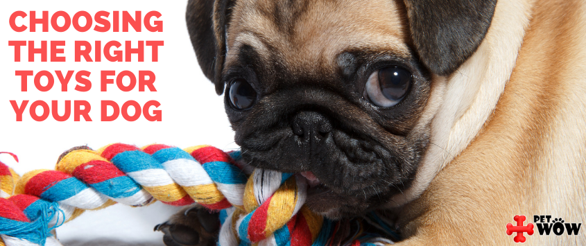 Choosing The Right Toys For Your Dog
