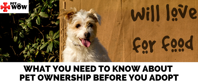 What You Need To Know About Pet Ownership Before You Adopt