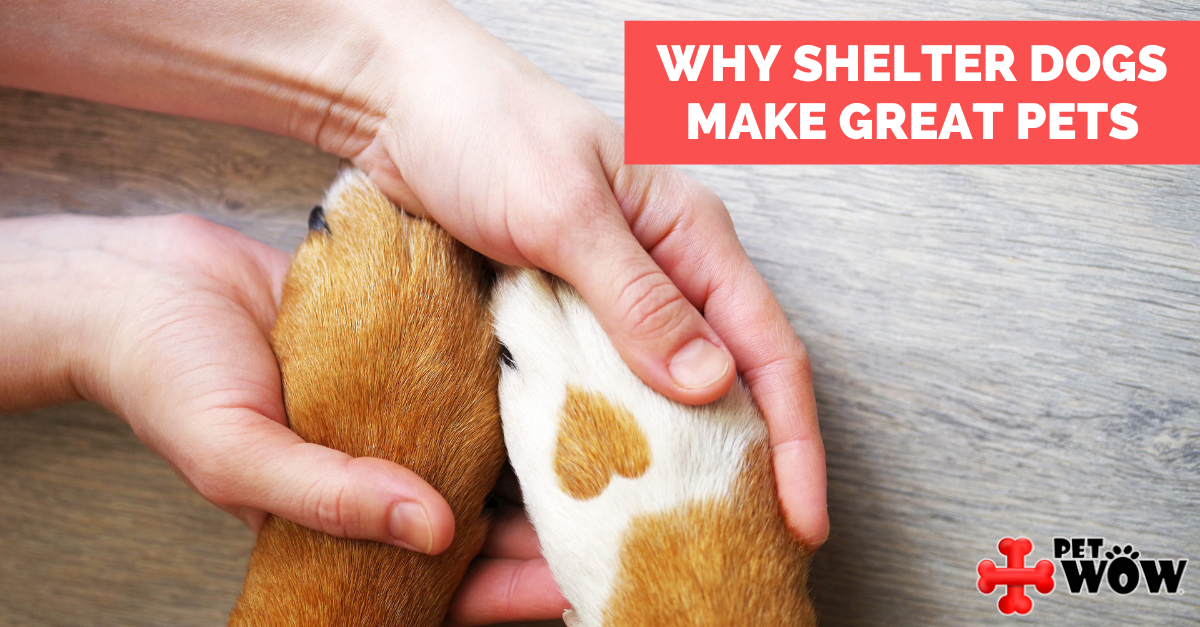 Why Shelter Dogs Make Great Pets