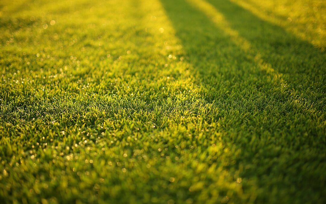 Saving Our Lawns or Saving Our Artificial Turf?