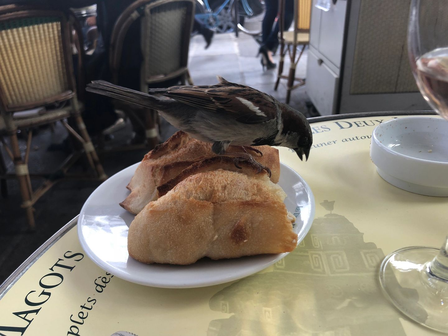 Bad-ass Parisian sparrow totally attacked my table, ate my bread