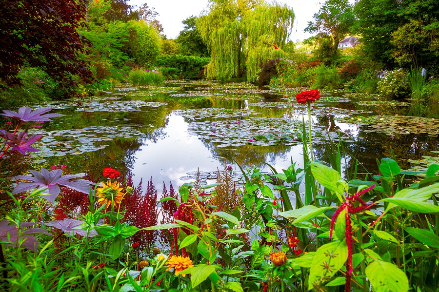 How to Keep Pond Predators Away from Your Yard