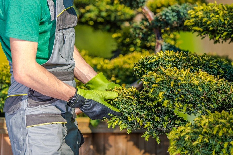 7 Common Landscaping Mistakes Homeowners should Avoid