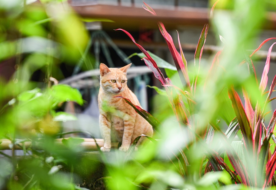 Use these Yard Cat Repellents to Protect Your Landscaping