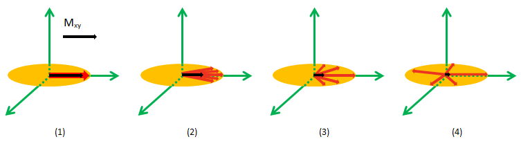 De-Phasing (Loss of Phase Coherence) During T2